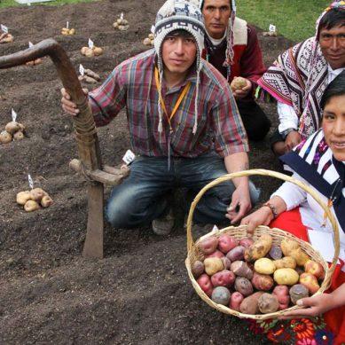 PERUMIN Inspira: 180 emprendimientos de la sierra peruana postulan al premio de innovación social
