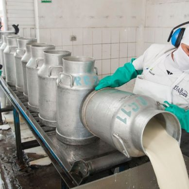 Antapaccay acopia producción lechera de Espinar para que no se pierda