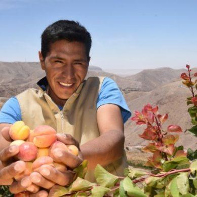 Anglo American ha tecnificado más de 100 hectáreas de cultivo en Moquegua